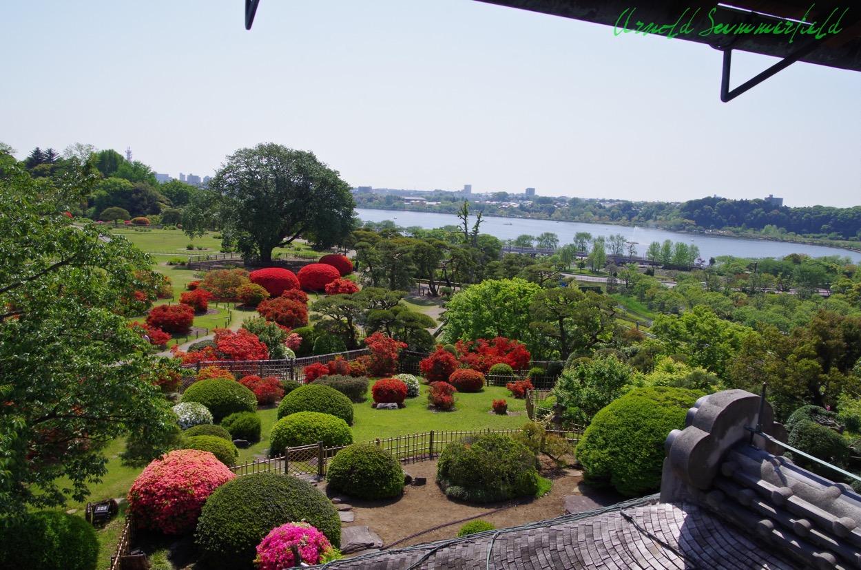 好文亭から見たツツジ@偕楽園.茨城県水戸市