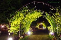 キバナ藤のミニトンネル