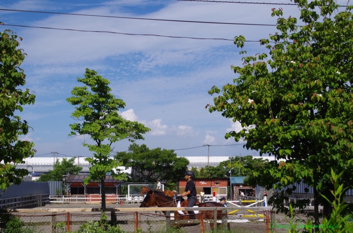 乗馬クラブの向こうに夏の雲